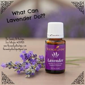 Lavender_550x550