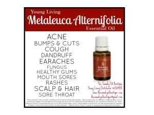 Melaleuca-AlternifoliaUses